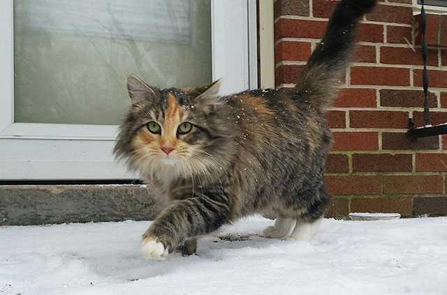 SnowcatWEB