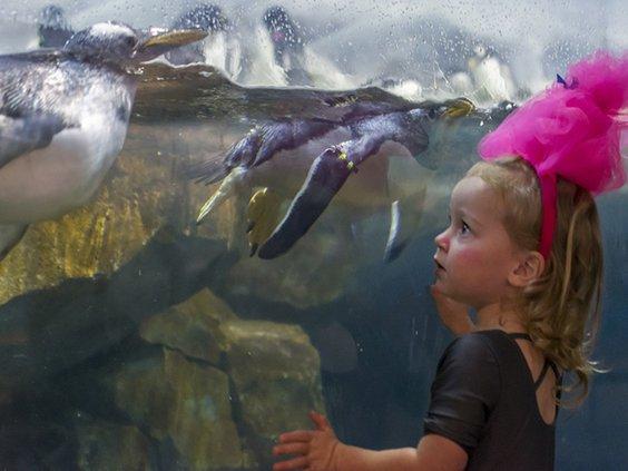 Aquarium october pic.jpg