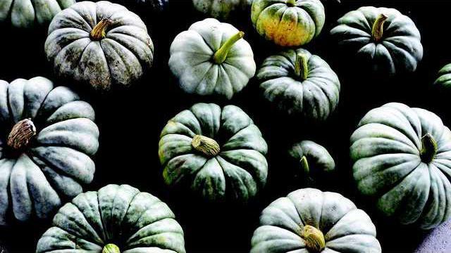 Jarrahdale pumpkins 2