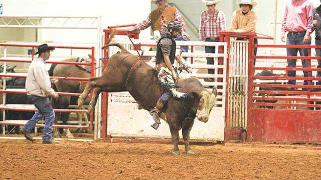 bull w L
