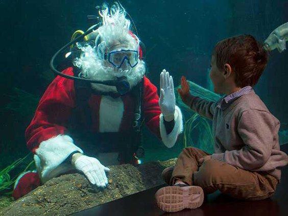 Aquarium-scuba-claus-picWEB
