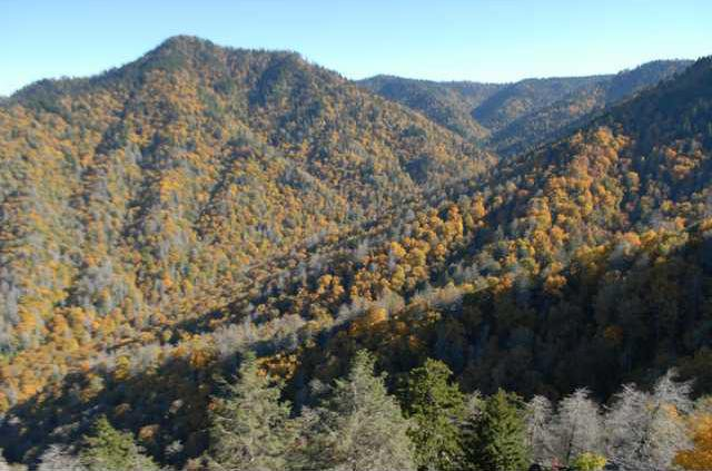 Dead hemlock trees at Great Smoky Mountains National Park