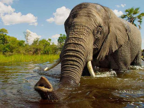 elephant1WEB