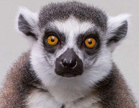 LemurWEB