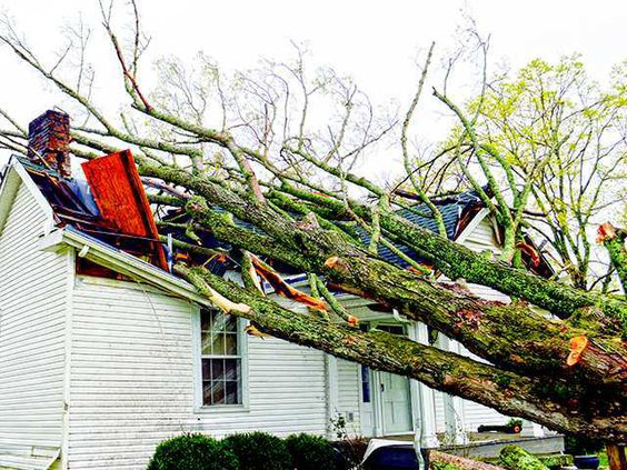 Storm - Tree on house