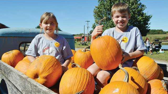 rotator--Pumpkin-pumpkins