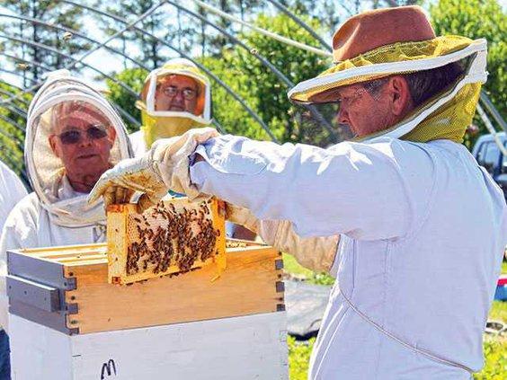 beekeepers1WEB