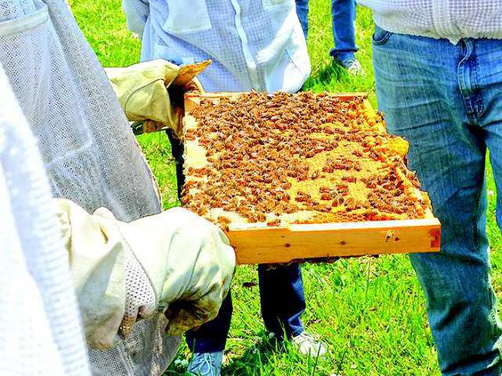 beekeepers3