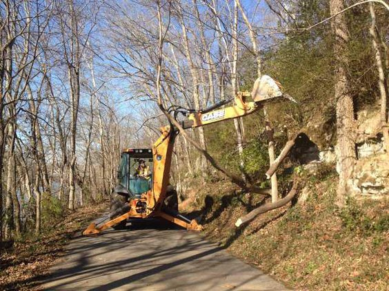 greenway tree removal2