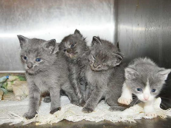 kittensWEB