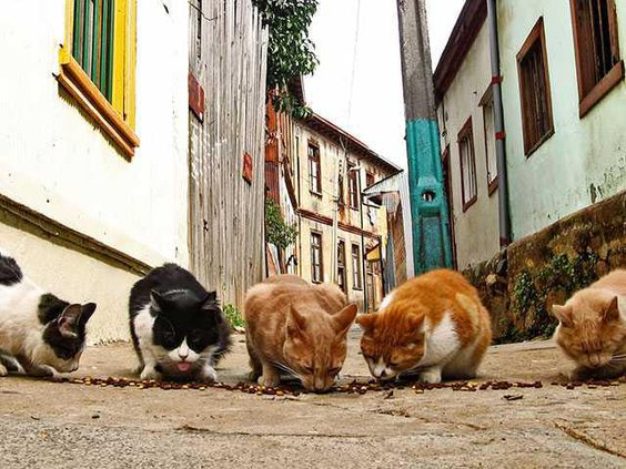 street catsWEB