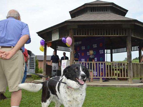 Dog Park grant original