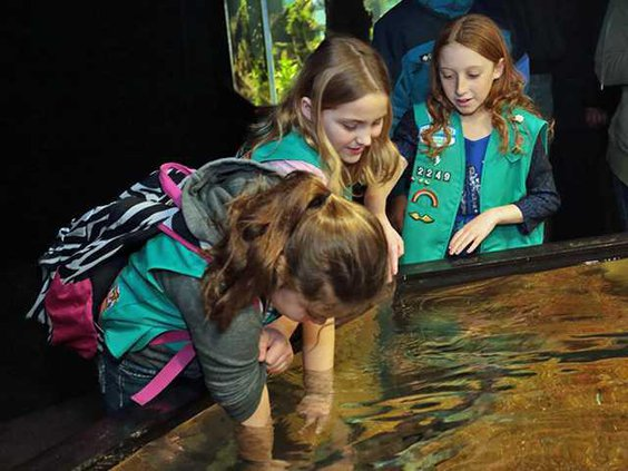 Half off at Aquarium Feb. pic