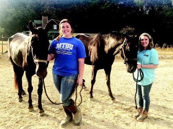 WCHS barn horses