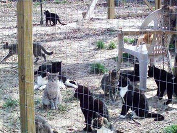 Animals kastaway kitties original