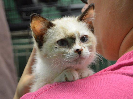 pet of the week - kitten.jpg