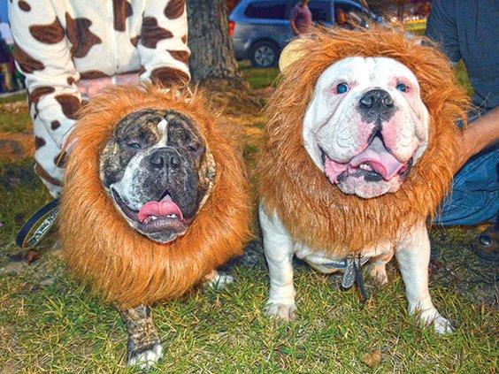 3 Lion Dogs.jpg