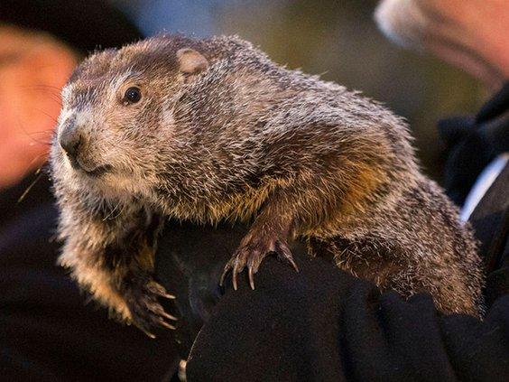 Groundhog Day pic.jpg