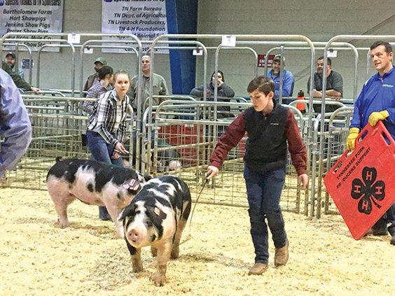 1  John Porter Prate hog show '19.jpg