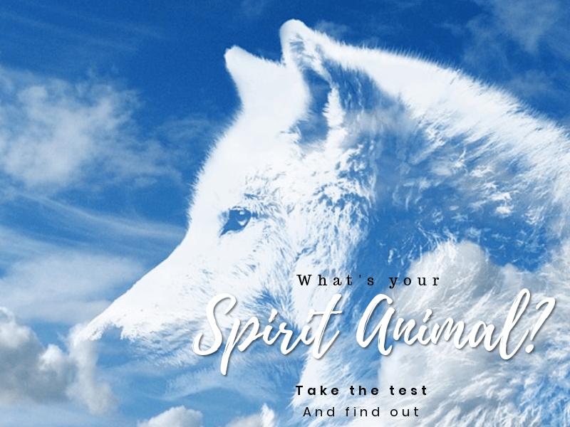 spirit animal.png