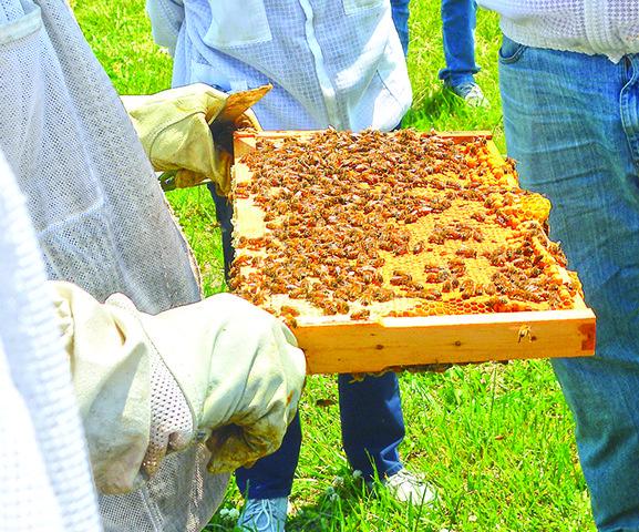 beekeepers3.jpg
