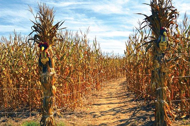 ^corn maze.jpg