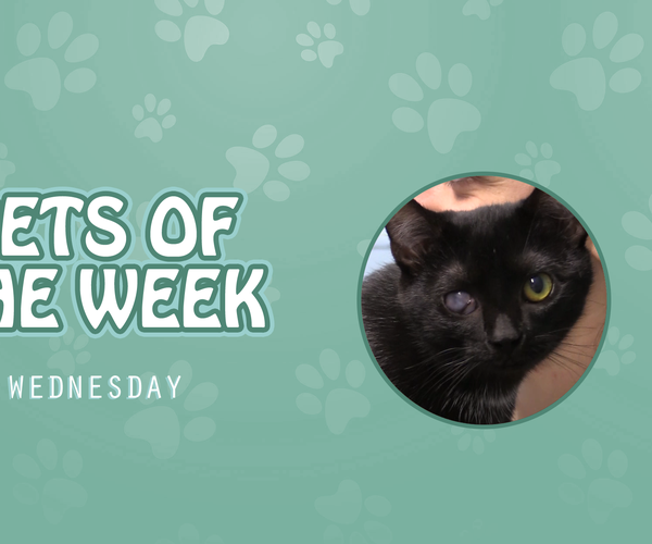 Pets of the Week - Wednesday