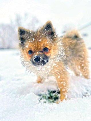 Snow - Dog.jpg