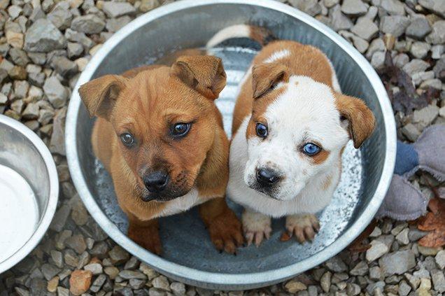 compactor puppies.jpg