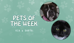 potw - kia n darth