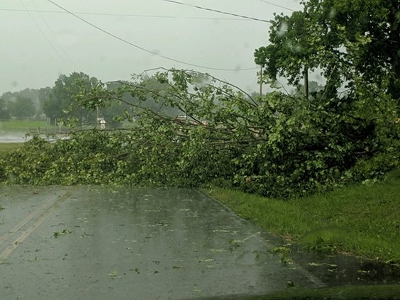 Tree down - Bethany Road.jpg