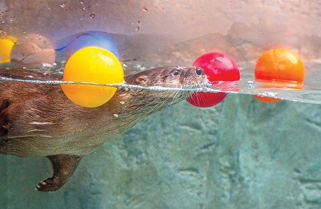 Style - River Otter Falls exhibit.jpg