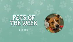 Pets of the Week - Brutus