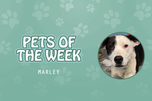 Pets of the Week - Marley
