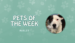 Pets of the Week - Marley