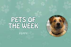 Pet of the Week - Poppy