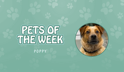 Pet of the Week - Poppy