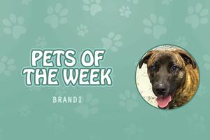 Pet of the Week - Brandi