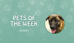Pet of the Week - Brandi