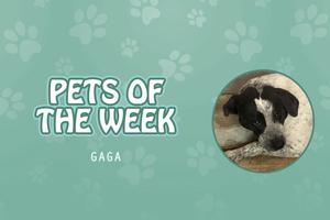 Pet of the Week - gaga