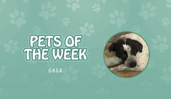 Pet of the Week - gaga