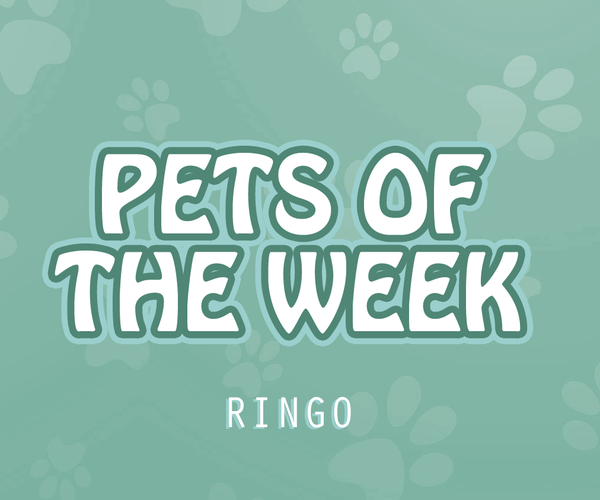 Pet of the Week - Ringo