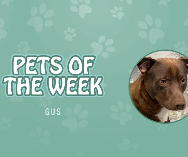 Pet of the Week - Gus