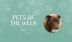 Pet of the Week - Gus