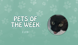 Pet of the Week - June 19, 2020