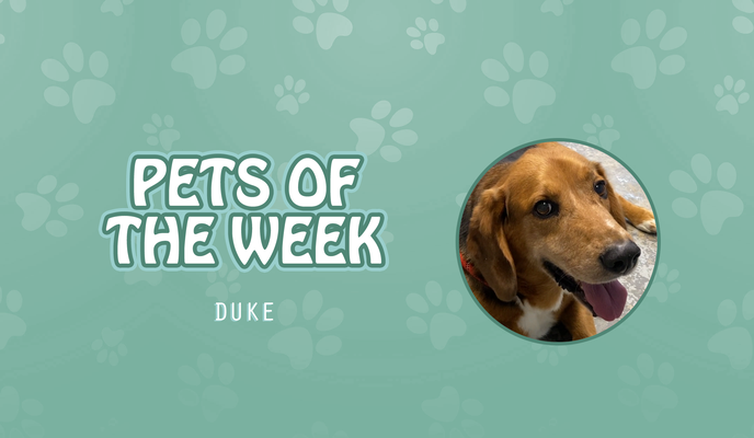Pet of the Week - duke