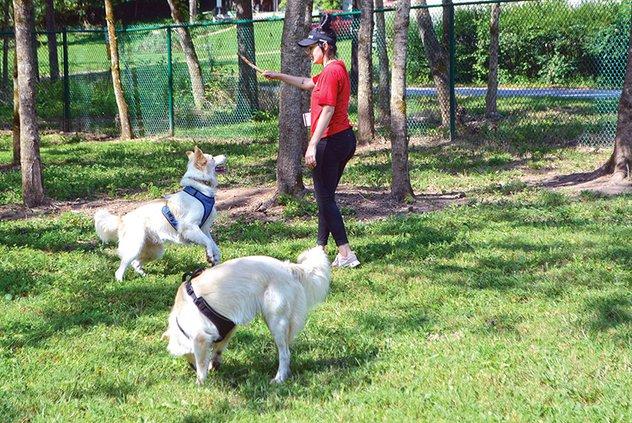 Dog Park Pawpular 1.jpg