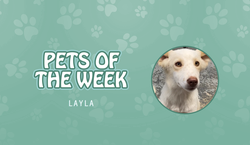 Pet of the Week - Lyla