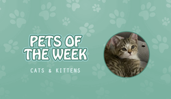 cats and kittens POTW