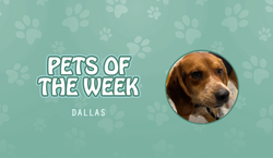 Pet of the Week - Dallas